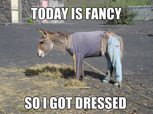 Fancy Donkey